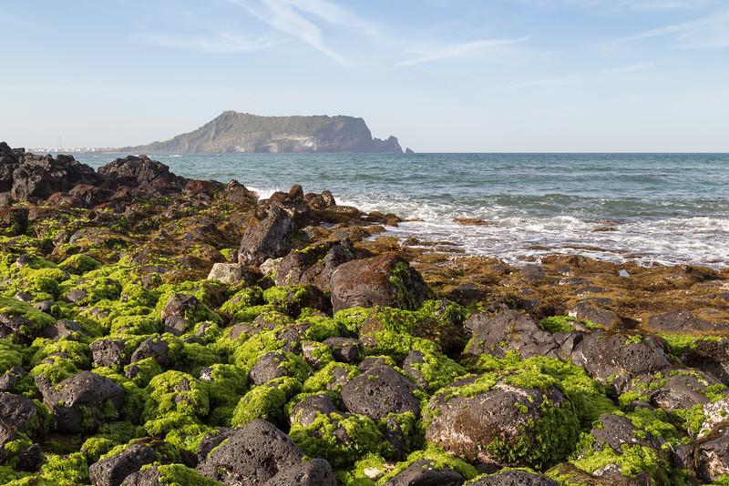 Seaweed & black lava rocks