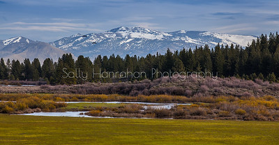 Sierra Valley Spring