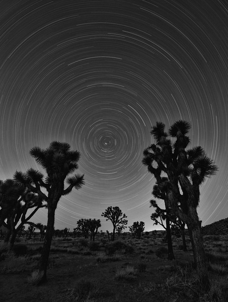Star Trails at Joshua Tree National Park, CA