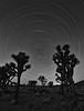 Star Trails at Joshua Tree National Park, CA