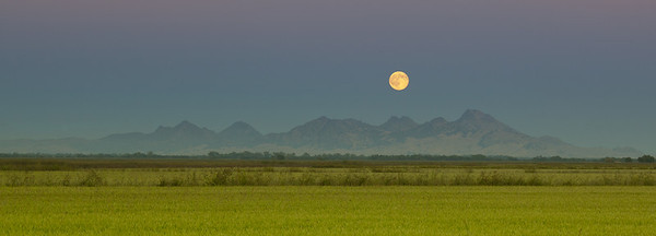 HARVEST MOON OVER SUTTER BUTTES