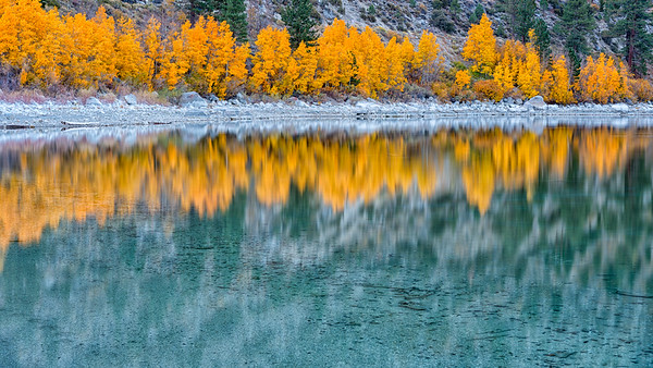 Fall Aspens - June Lake