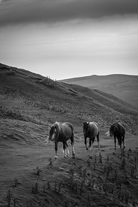 Horses, South Wales