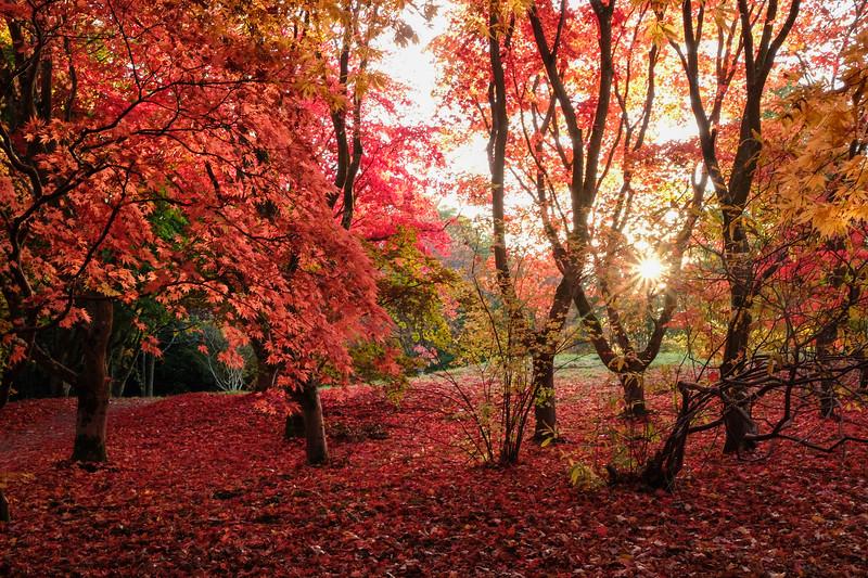 Autumn at Bodnant
