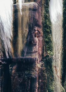 The Man in the Forest