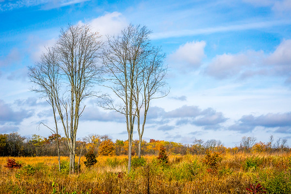 Bare Trees in an Autumn Field