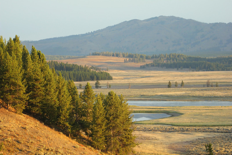 Hayden Valley, Yellowstone National Park, Wyoming