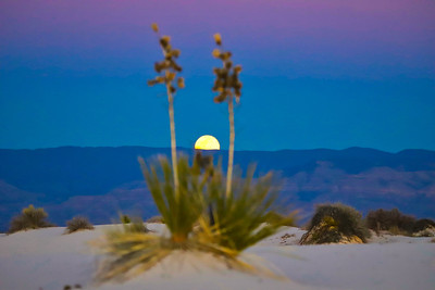 Yucca and Full Moon Rising