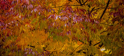 Fall Colors 2015-2