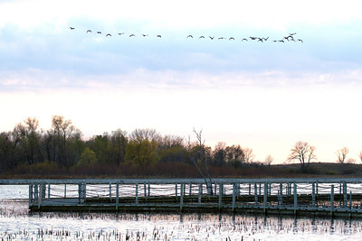 Geese over Horicon