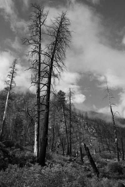 Scattered Timber, Idaho #07