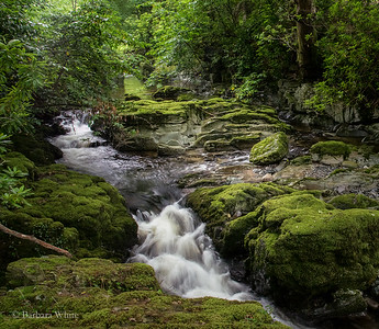 Tollymore Stream