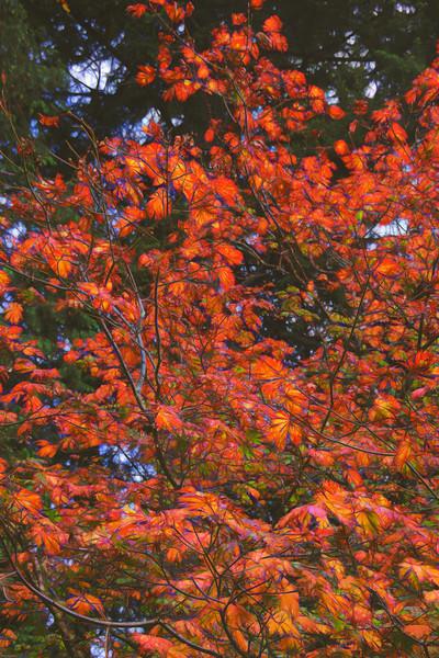 The Glow of Autumn