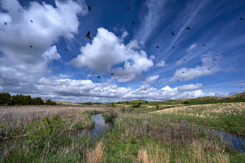 Swallows fill the sky above the Snake River south of the Merritt Reservoir near Valentine, Nebraska