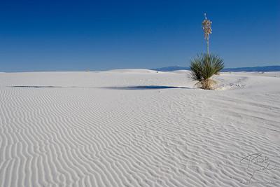 White Sands Sentinal