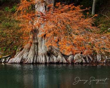Fall on the Guadalupe