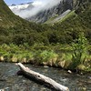 Stream with log, snowy mountains, New Zealand