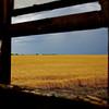 Window View On Wheat.  Approaching Austin, Texas