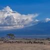 Herds of animals in front of Mt. Kilimanjaro, Amboseli National Park, Kenya, East Africa