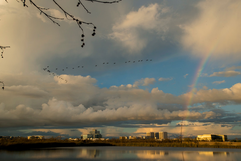 Birds and rainbow.