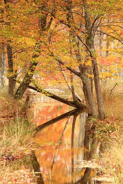 Woodland Stream in Autumn, Acadia National Park