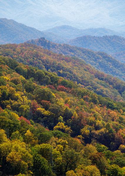 Autumn's Layers