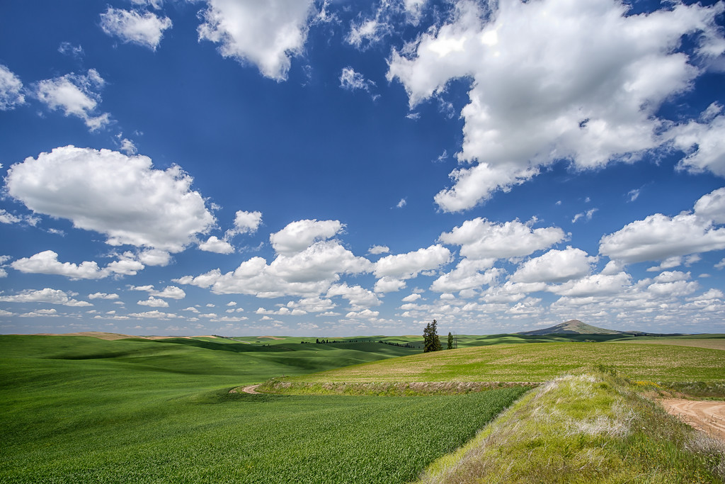 Steptoe Butte in the distant horizon of the Palouse.