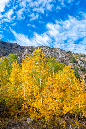 Deadman Creek Fall Colors - Sonora Pass-4