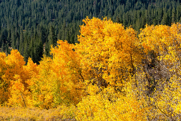 Fall Colors - Sonora Pass-2
