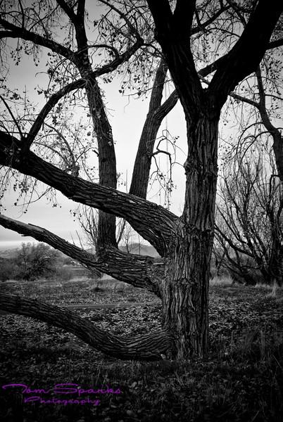 Landscapes-0375