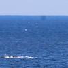 Whale Febuary-8923