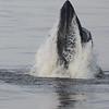 Bill McKim jersey shore whale watch tour (820 of 637)