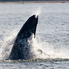 Jersey shore whale watching bill mckim june25th-4721