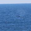 Whale Febuary-8947