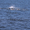 whales7-08-5339