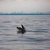 Bill McKim jersey shore whale watch tour (954 of 637)