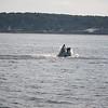 Jersey shore whale watching bill mckim june25th-4717