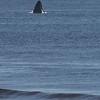 Whales Febuary 2018-8988