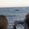 bill mckim jersey shore whale watch  (687 of 492)