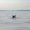 Bill McKim jersey shore whale watch tour (973 of 637)