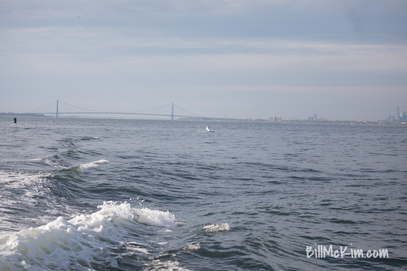 Jersey shore whale watch tour (857 of 858)