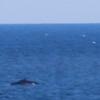 Whale Febuary-8930