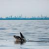 Bill McKim jersey shore whale watch tour (955 of 637)