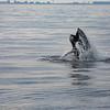 Bill McKim jersey shore whale watch tour (855 of 637)