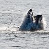 Jersey shore whale watching bill mckim june25th-4717-2