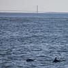 Jersey shore whale watching bill mckim june25th-4693