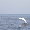 Jersey shore whale watch tour (818 of 858)
