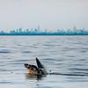 Bill McKim jersey shore whale watch tour (955 of 637)-2