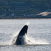 Jersey shore whale watching bill mckim june25th-4721-3