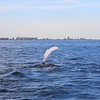 Jersey shore whale watch tour (306 of 858)